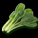 小松菜の長持ち保存方法と保存期間!【冷凍・冷蔵・常温】全て解説